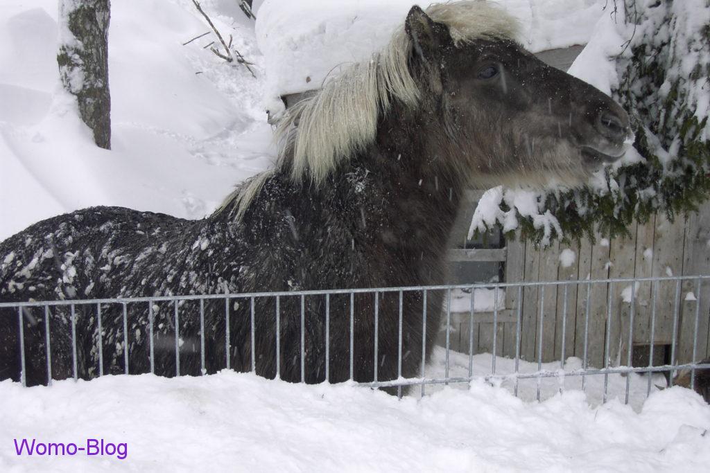 Pferd im Winter